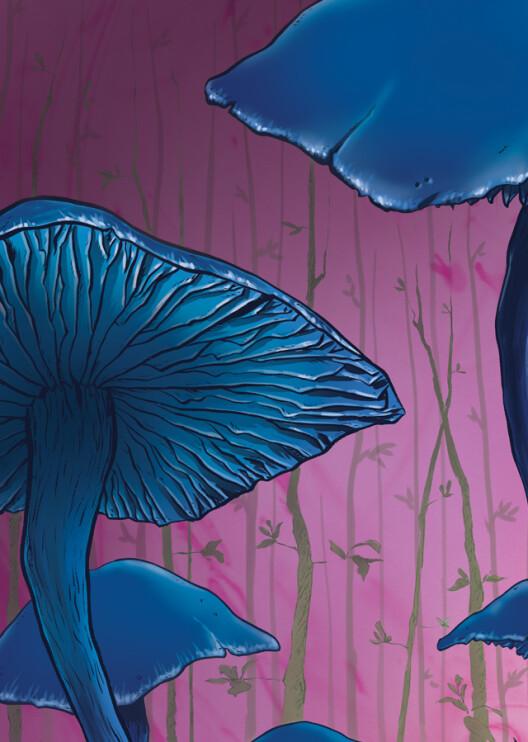 Magic_Forest_colour_CU02